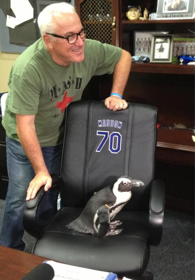 Courtesy of Fansided: That's a penguin